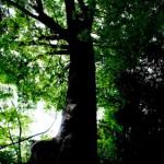 「成長意識の高さ」がその人の価値を決める理由