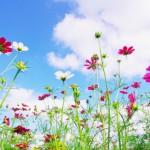 メメント・モリの意味 ‐自分の葬式を想像し、今日をどう生きるか考える