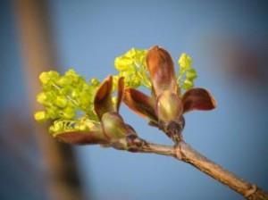 springtime--explosion_19-126037