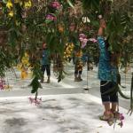 【アート】「Floating Flower Garden – 花と我と同根、庭と我と一体」に行ってきたよ