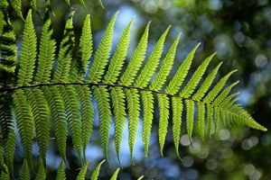 green-fern-leaf-natural-medium