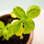 「毎日1%」ずつ成長すれば、「1年後には37倍」成長できる